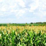 Cardeal Parolin: fortalecer a agricultura para que haja comida para todos